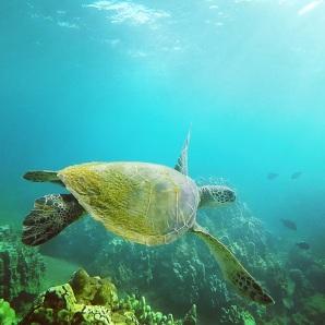 DAWN Dish Detergent Helps Save Sea Turtles   Conservation