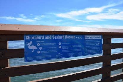 ShorebirdSignage