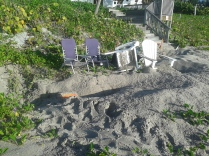 Green sea turtle nest next to beach furniture