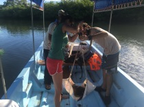 LMC S.W.I.M. participant, Martha, works with ICAPO staff to weigh the captured hawksbill sea turtle.