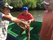 Once captured, the turtle is handed over to ICAPO biologists waiting in a nearby boat. Padre Ramos Natural Preserve.