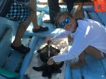 LMC S.W.I.M. participant, Mari, measures the captured turtle.