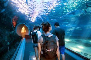 LMC SWIM guests explore Maui Ocean Center. PC: Jeff Biege Photography