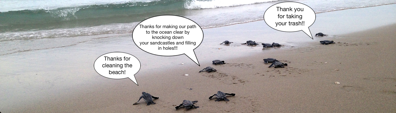 page_header_sea_turtles.jpg